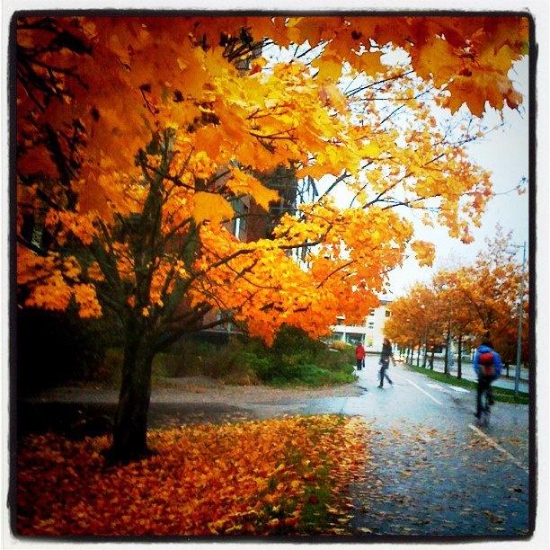 October in Kannelmäki. Photo by UllaLydia feat Instagram