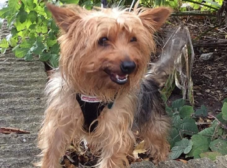 This Is Our Giddy Girl Bella She Came Into The Centre After Been Left In A Property For A Number Of Days Bella Has Lots Of Energy And Is Animals Terrier