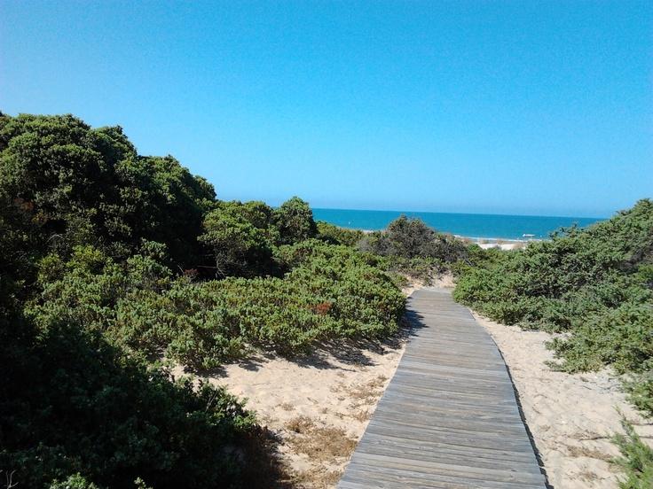Dunas con enebros y sabinas (Juniperus sp.) de la Playa de la Barrosa
