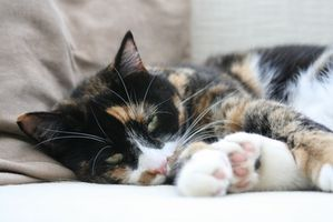 How to Remove Cat Hair From Furniture & Rugs thumbnail