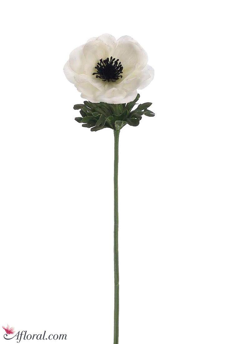 Best 25 Anemone Flower Ideas On Pinterest Anemones