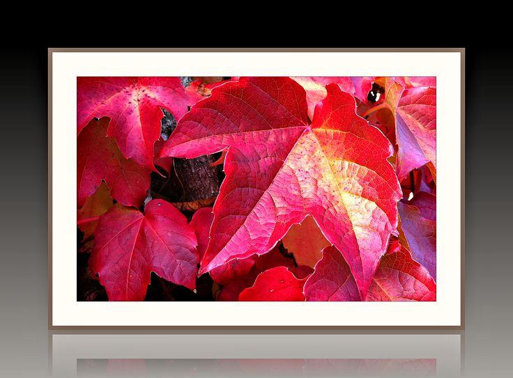 """Багетная фотокартина """"Красные листья""""  - ручная работа"""