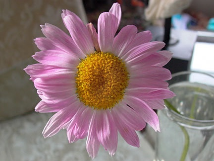 59 Best Images About Gerber Daisies Wedding Flower Ideas