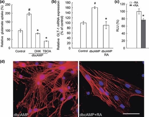 Retinoic acid mediates the expression of glutamate transporter-1 in rat astrocytes through genomic RXR action and non-genomic protein kinase C signaling pathway