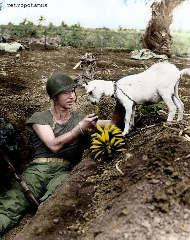 A United States Marine with his pet goat during the battle of Saipan, 1944.  Colorized by Retropotamus.