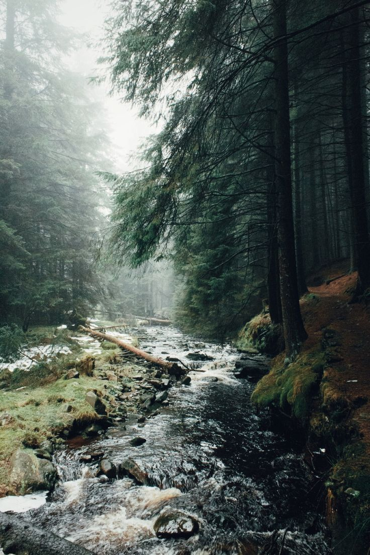 Ladyclough Forest | Daniel Casson Photography