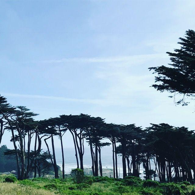 Park. San Francisco