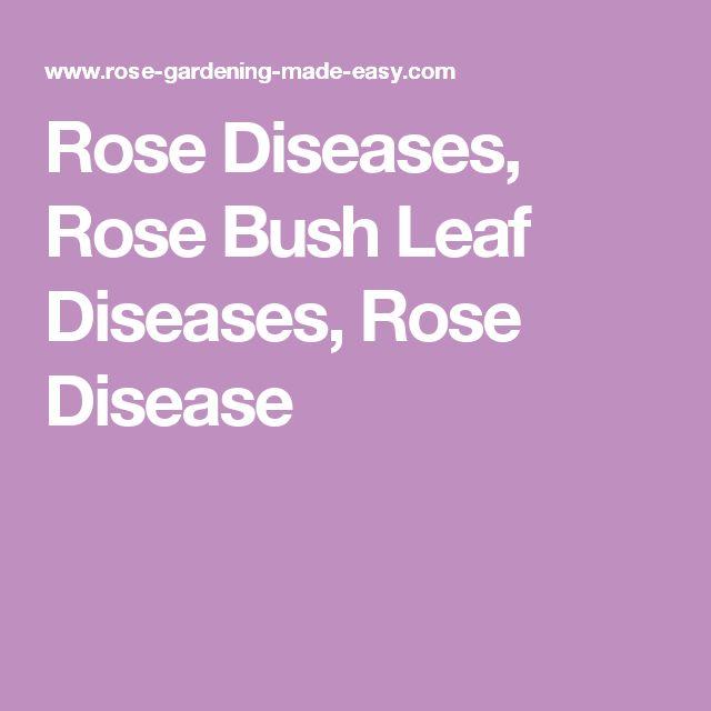 Rose Diseases, Rose Bush Leaf Diseases, Rose Disease