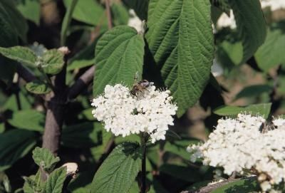 Natural Bee Repellent for Outdoors