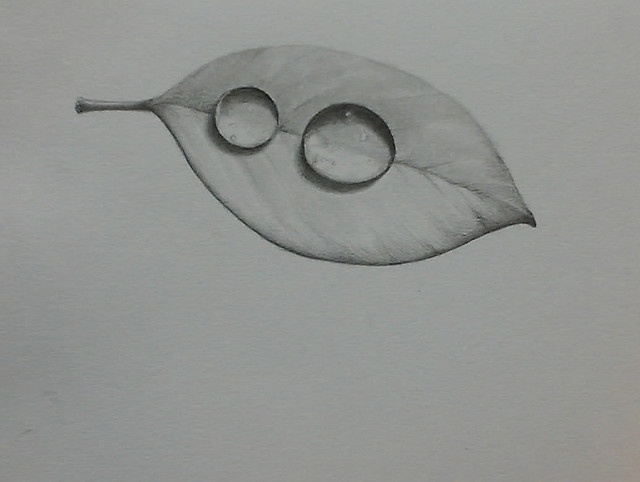pencil drawing drops on a leaf