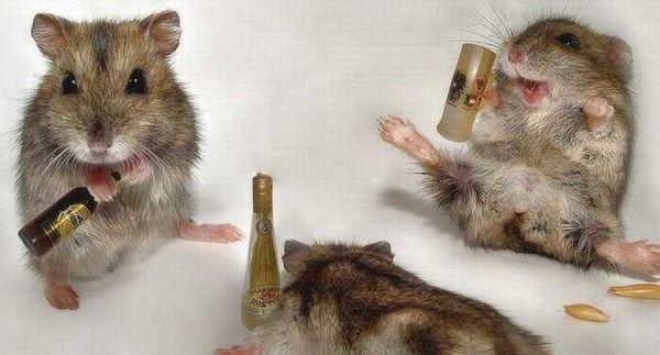 Algoritmo permite identificar bêbados em multidões › Papo de Bar. Sua revista oficial sobre Bebidas Alcoólicas.
