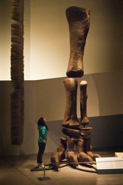Los dinosaurios españoles, a escena en Granada | Sociedad | EL PAÍS - Jambe d'Argentinosaurus.