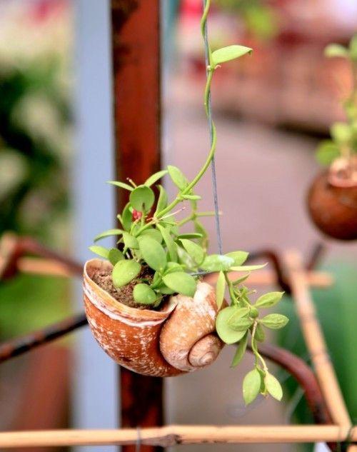 seashell hanging planter