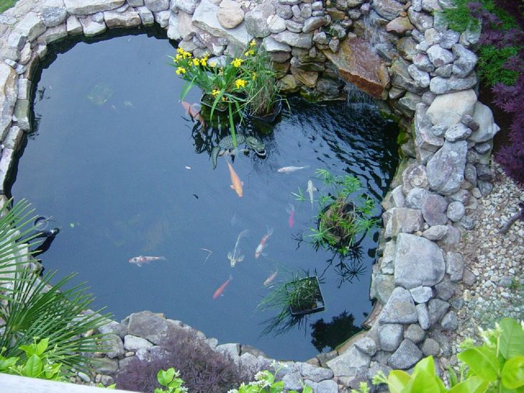 Backyard ponds ponds and waterfalls backyard koi pond for Outdoor goldfish pond ideas