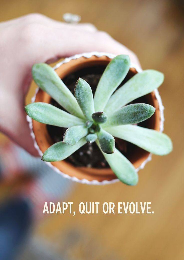 Adapt, Quit Or Evolve (by A Beautiful Mess)