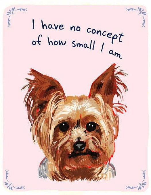 The 2 O'sPuppies, Small Dogs, Yorkie, Pets, So True, Yorkshire Terriers, Little Dogs, Big Dogs, Animal