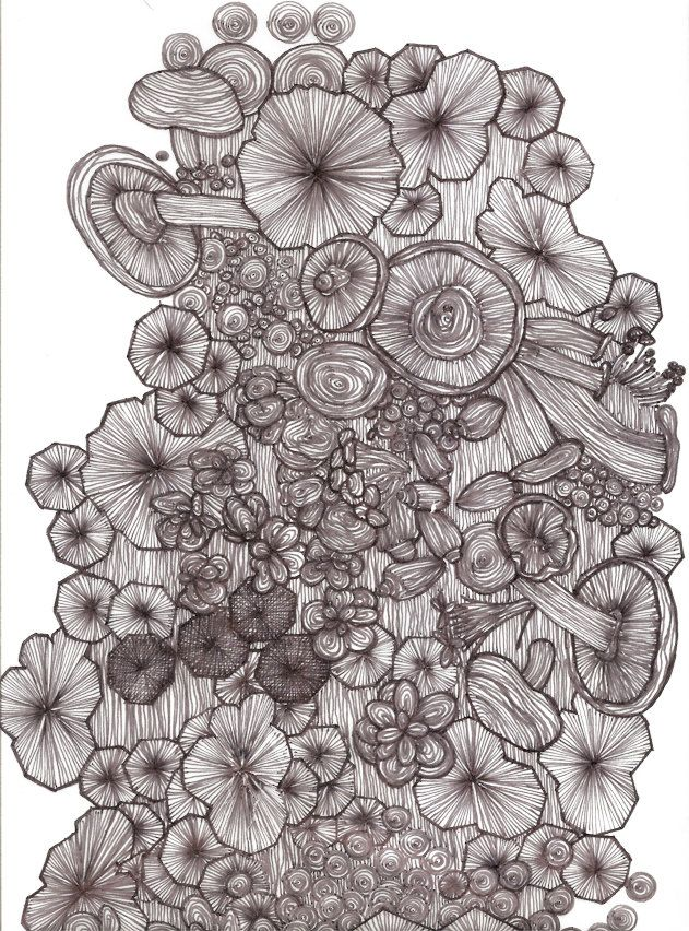Line Drawing Natural Forms : Images about natural forms pen and ink on pinterest
