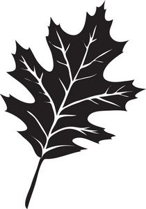 Leaf Clipart Image: The Silhouette Of A Oak Leaf