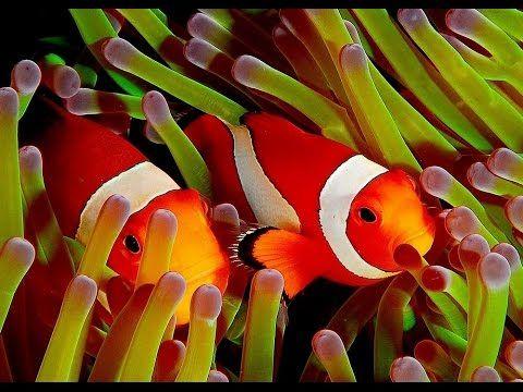 Clown Fish - My animal friends - Animals Documentary -Kids educational Videos - YouTube 12.5 Min.