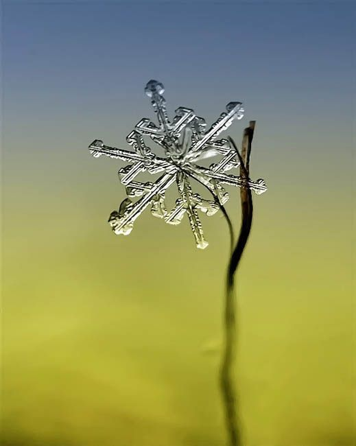 Ethereal Macro Photos of Snowflakes in the Moments Before They Disappear
