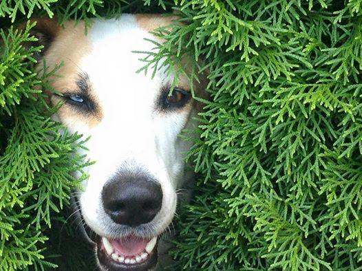Hunde-Blog: Wie streichelt man Hunde richtig?