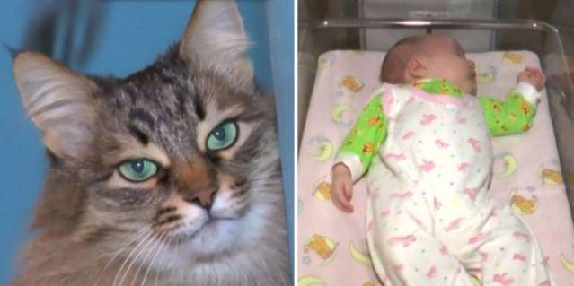 Katt räddade livet på spädbarn – hyllas över världen