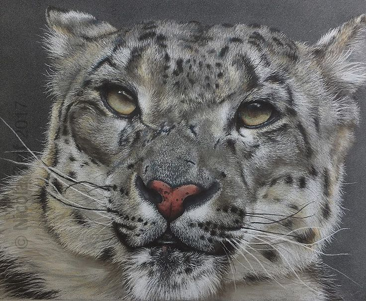 """""""Battle Scar"""". Pastel Pencil on Pastelmat board. Framed Original available for purchase. Please visit my website www.nicolareif.com"""