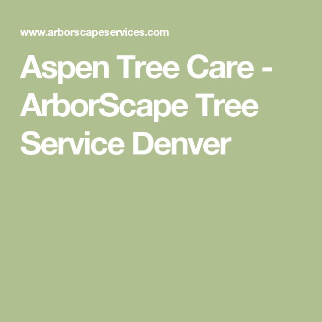 Aspen Tree Care - ArborScape Tree Service Denver