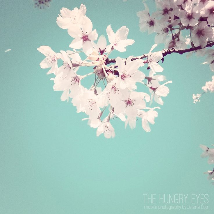 Flower Photography, Blossom Print, Nature Print, Cherry Blossoms Photography, Spring Decor, Flowers Print, Girls Room Decor, Nursery Decor by TheHungryEyes on Etsy