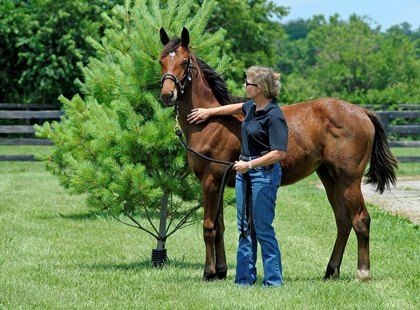 Positive, Negative Reinforcement in Horse Training Compared
