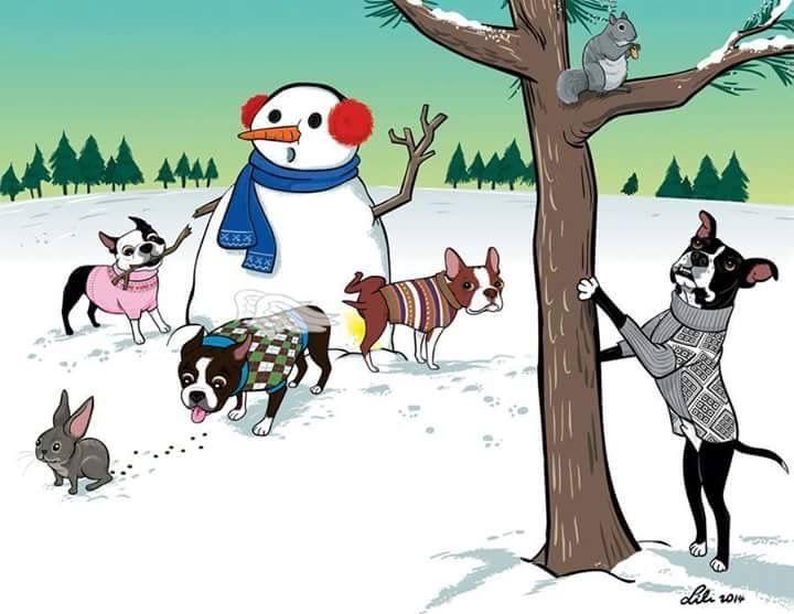 Winter Boston terrier