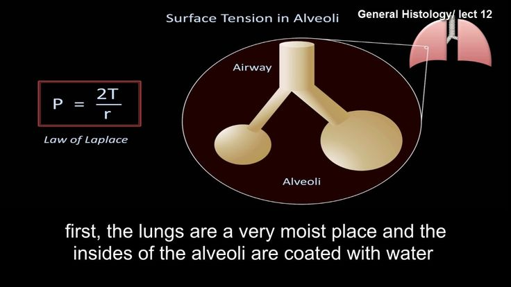 lect 12 :  surface tension and how pulmonary surfactant improves respira...