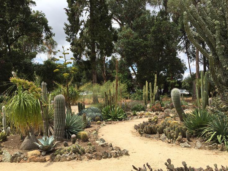 Cactus Garden Path: Arizona Cactus Garden Staford University