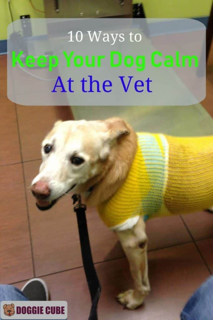 10 Ways To Keep Your Dog Calm At The Vet Dog Training Books