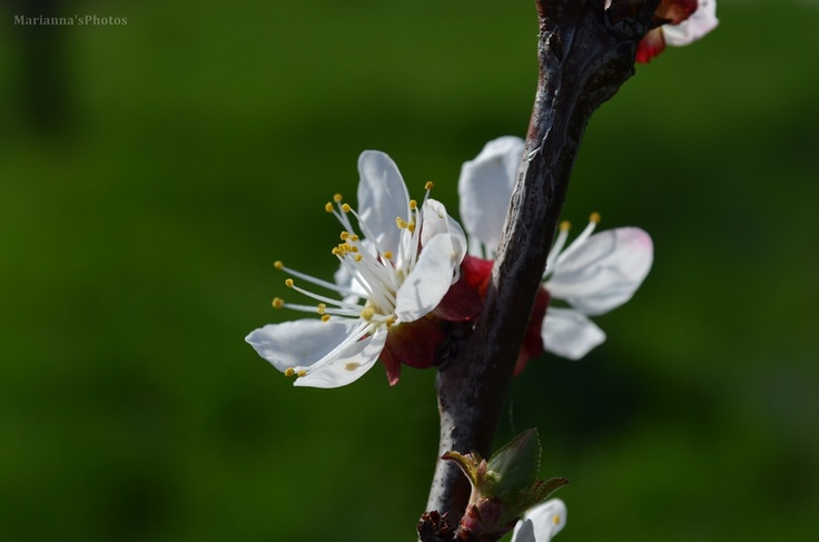 """Springtime"""