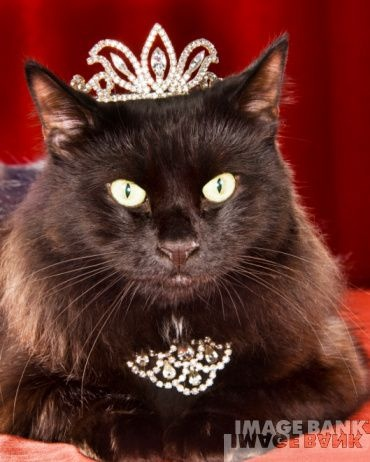 Meow Tiara And Jewels Fit For A Cat Oh My Little Sassy So Needs
