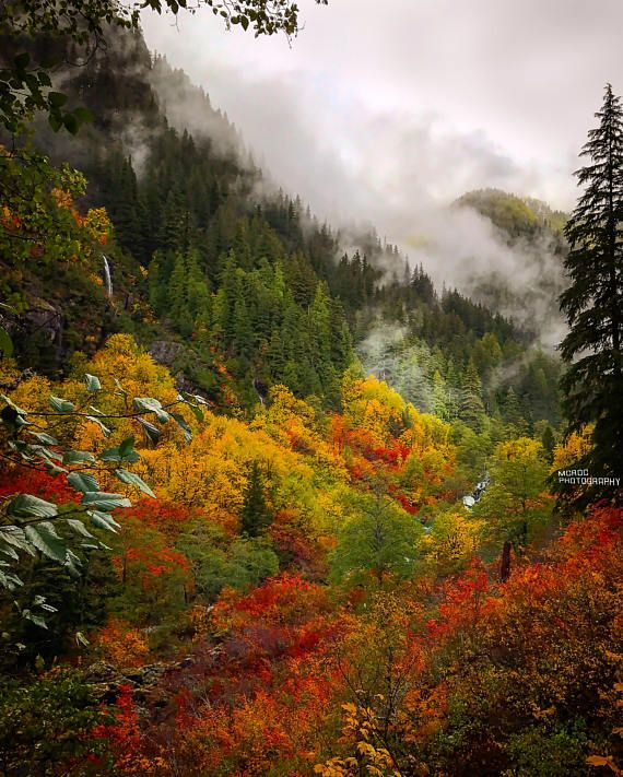 Misty Valley Beautiful Leaves Mountains Fog Rain Pine Trees Red Yellow Northwest Landscape Natu Autumn Scenery Northwest Landscaping Nature Photography