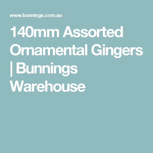 140mm Assorted Ornamental Gingers | Bunnings Warehouse