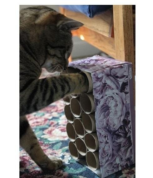 Cat game #diy