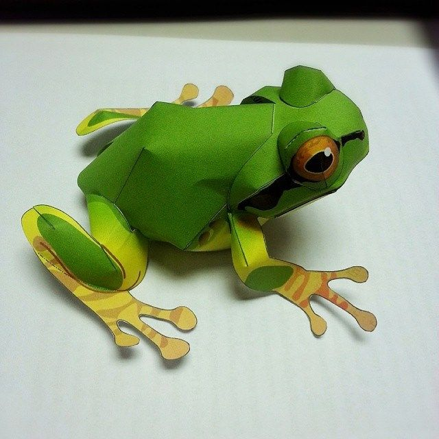 Tree Frog ★3 Papercraft Papermodel Frog Treefrog