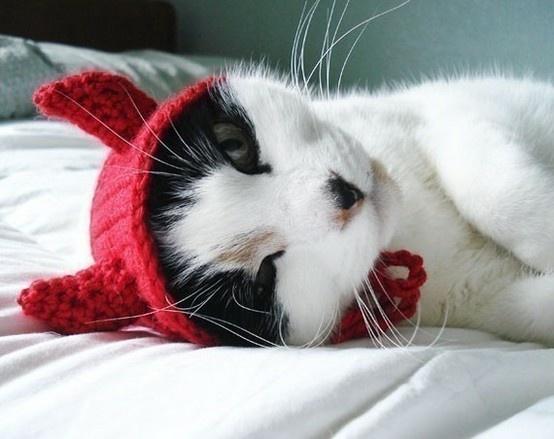 little devil cat