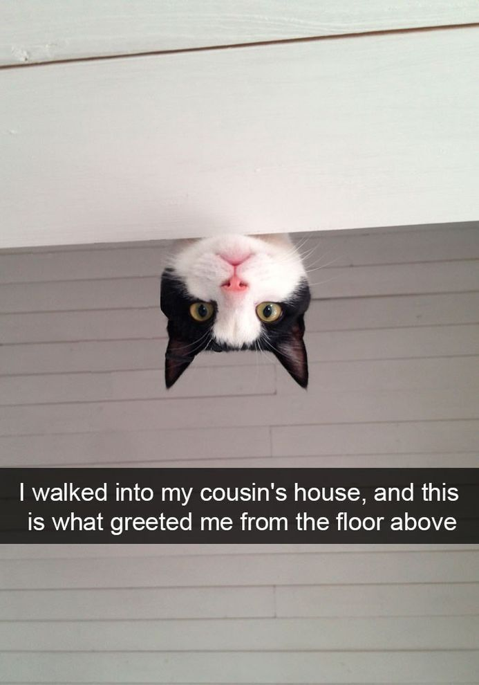 Funny Snapchats Cat Pictures