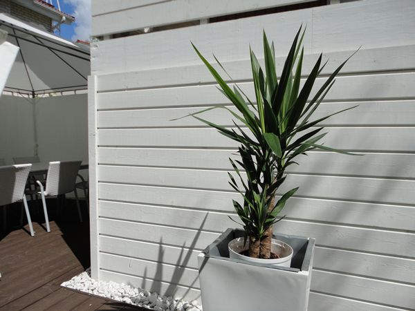 Terrace with a yucca tree