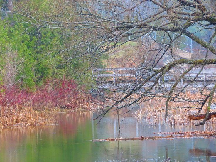 Bridge over Scanlon Creek