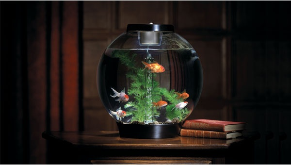 Biorb 30 aquarium under the sea pinterest aquarium for Fish tank full movie