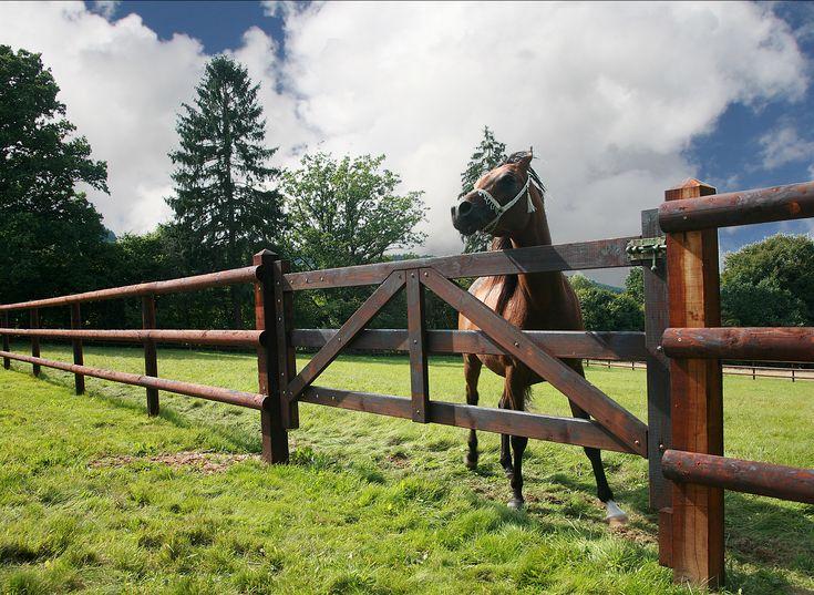 Portail en bois de qualité spécialement aménagé dans une #prairie pour #chevaux