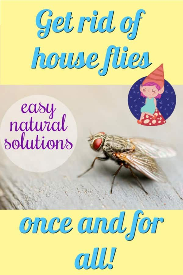 Why Are There Flies In My House All Of A Sudden Crafty Little Gnome House Crafty My House