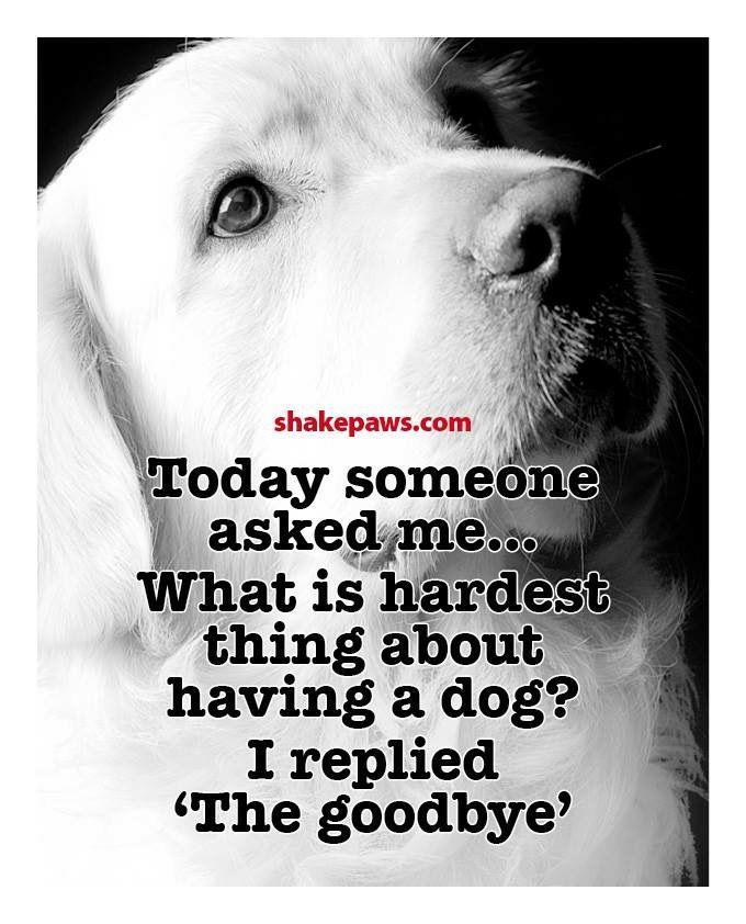 Best 20+ Loss Of Dog Ideas On Pinterest
