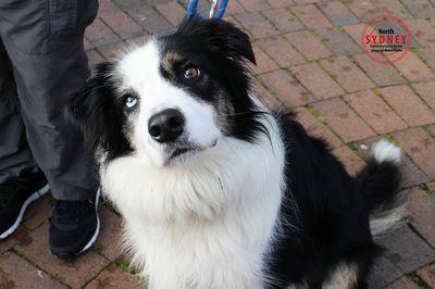 Dog Portraits - sydneyphotographyschool
