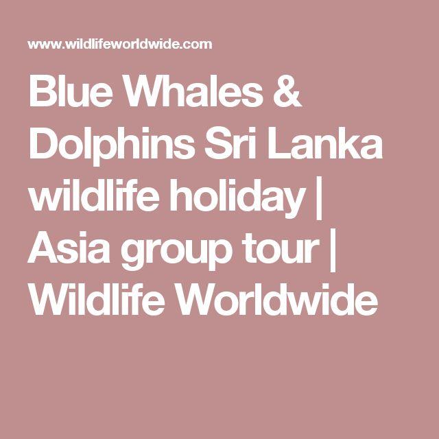 Blue Whales & Dolphins Sri Lanka wildlife holiday | Asia group tour | Wildlife Worldwide